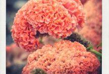 Juin - Des fleurs, une saison