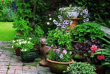 Garden plants & ideas