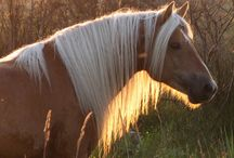 Equus / The most beautiful animals I have ever seen. / by Grace Allen