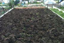Il mio orto / Ho creato questa bacheca per gli amanti dell'orto come me. Scambiamoci consigli utili! Ciao ☺️