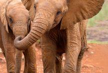 Elephants / by elefunds