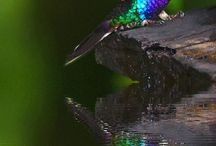 птички / домашняя птица
