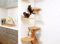 Katt stege