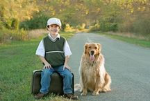 Pet Safety and Care / Pet safety products and ideas. #pets