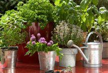 Jardinage et Potager Citadin