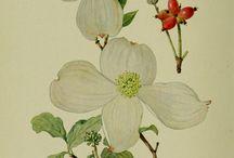 Illustrations : Flowers