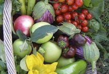Vegetable Garden and Orchard ar Mica Grange