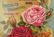 Antique seed catalogues - one of my many weaknesses