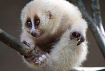 animales raros, en peligro de extinción
