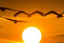 Sunset and Sunrise :)
