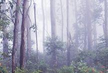 Lesní cesty a cestičky