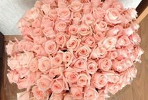 Flowers / Flowers, Beautiful Flowers