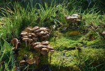 Houby / fungi