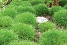 Tuin beplanting