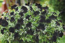 Sommarblommor och växter i kruka