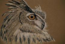 artiste animalier / réalisation de portraits d'animaux au pastel sec