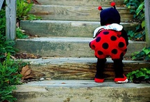 ladybugs, ladybugs, ladybugs!