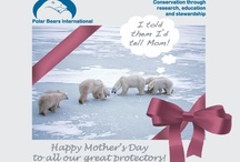 Polar Bear Greetings / by Polar Bears International