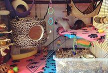 råttor