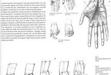 Anatomy ✤ Hands