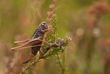 Insekten | LigaVogelschutz