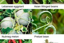 Vegetable heirloom plants