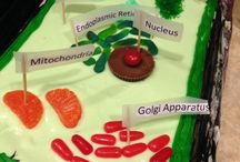 Plant Cell Project / by Michelle DeWitt