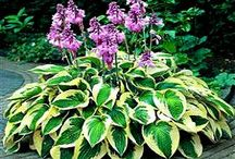 Garden-Shade ideas/plants / by Kathy Green