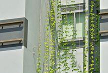 fasada zelena