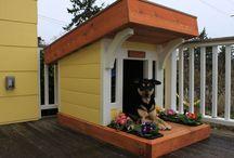 Casas de cachorros-