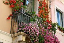 Fabulous flowers & gardens