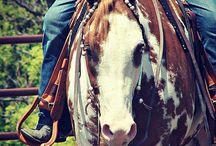 western paarden