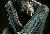 bats and stuff