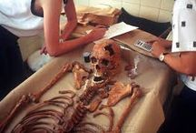 Forensic Anthropology - science of human biology / A science human biology, lets study with us and keep updates sifs india