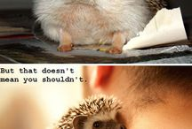 Hedgies <3
