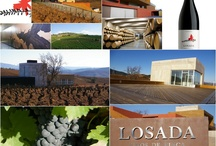 Come and visit Losada Vinos de Finca / Losada Vinos de Fina #Bierzo is situated in Cacabelos on the road to Villafranca del Bierzo. This location, in the centre of a triangle formed by Cacabelos, Villafranca and Toral de los Vados, allows the best possible access to the production zone of most of the quality grapes produced in Bierzo. #wine #winery #bodega #redwine #tasting #tourism #Spain