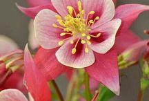 Цветы - результат творения природы!