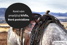 Koníšci / Horses are Best
