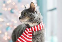 Happy Holidays! From our Paws to yours. / Fun images of our pets all ready for the holidays!
