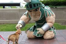 It's a Sparty in the USA / by Rachael Smith