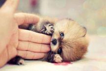 Most precious creatures ever! / by Amanda Robertson
