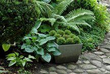 Shade Garden Mood Board