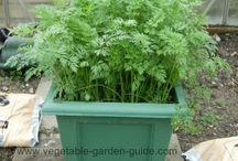 Garden-veg/fruit