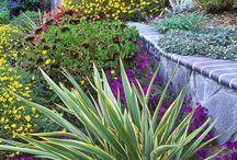Hillside & Slope Landscaping Ideas
