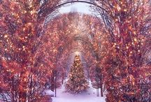 winter wonder(: / by Megan Elizabeth