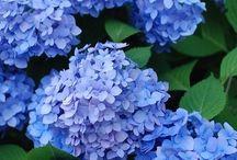 flori diverse