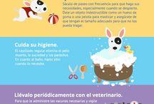 tips para mis mascotas