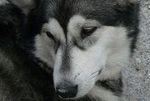 iHeart Huskies