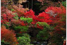 Japán kertek