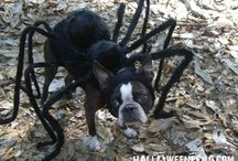e-cloth & The Best Pet Halloween Costumes / Pets in costume is something we look forward to at Halloween.